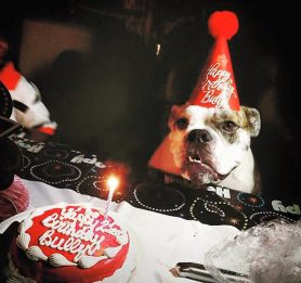 birthday cakes for dogs, best dog bakery in Boston