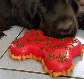 birthday cakes for dogs, gourmet dog treats, best dog bakery in Boston