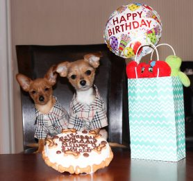 birthday cakes for dogs, treat of the month club for dogs