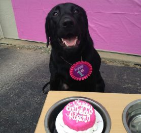 birthday cakes for dogs, best dog bakery