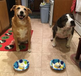 Dog birthday cake, dog cake bakery