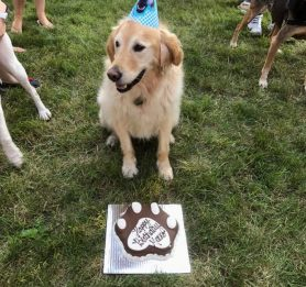 Birthday treats for dogs, dog safe cake