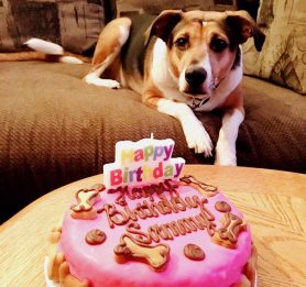 Puppy birthday cake, edible dog cakes, birthday treats for dogs